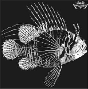 Various Artists (concept Albums & Themed Compilations) - Strange Fish Three CD (album) cover