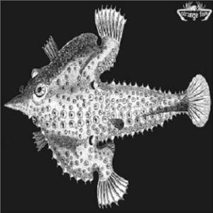 Various Artists (concept Albums & Themed Compilations) - Strange Fish Four CD (album) cover